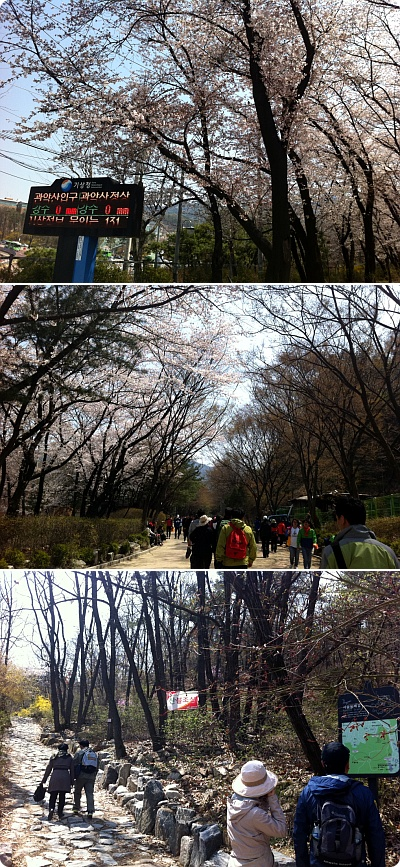 今年の花見は桜山道で満喫!
