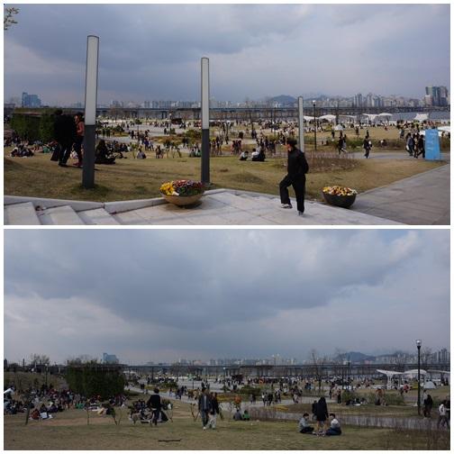 ソウルの花見!今年もヨイド公園へ!