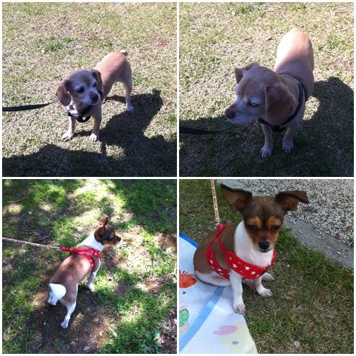 ソウルの「ボラメ公園」今日は2匹の犬とお散歩!