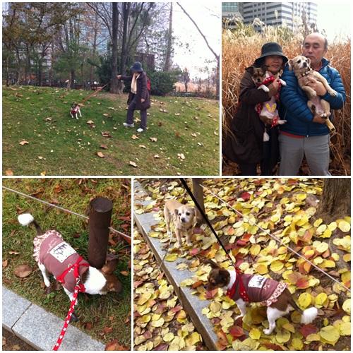 今年最後の紅葉!家族とポラメ公園散歩!