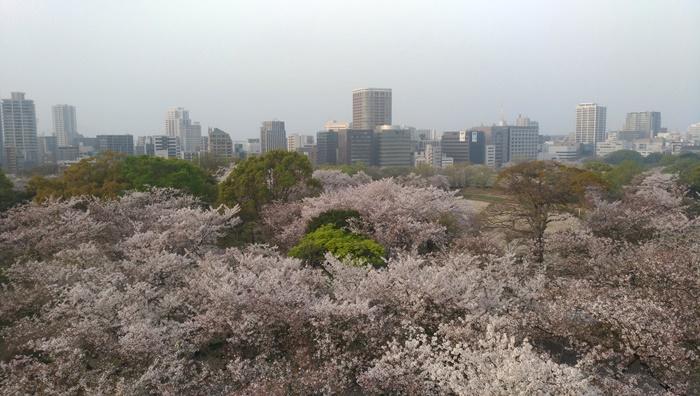 福岡に住む日韓夫婦の日常!